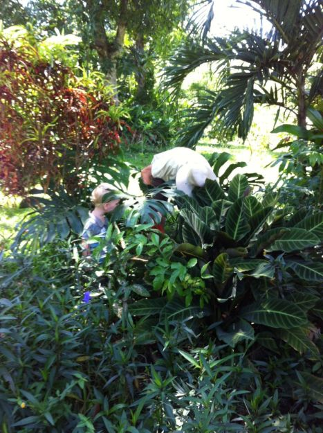 "Cory getting some ""help"" from Alex. We already have the giant leaf plant that's over Alex's head growing in our yard. Cory is digging up some of the plant with the purpleish leaves for us to take home."